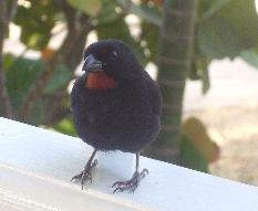 J6blackbird
